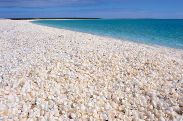 Shell beach in western Australia.