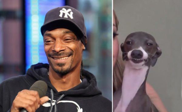 Snoop Dog vs real dog