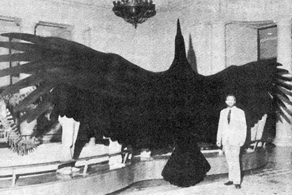 The largest bird in the world