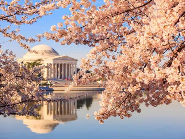 National Cherry Blossom Festival, Washington, D.C