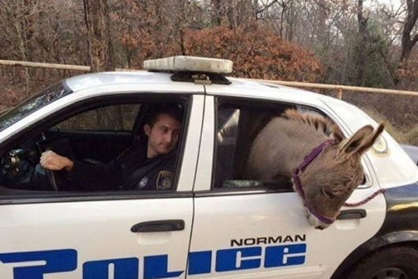 A little donkey in trouble
