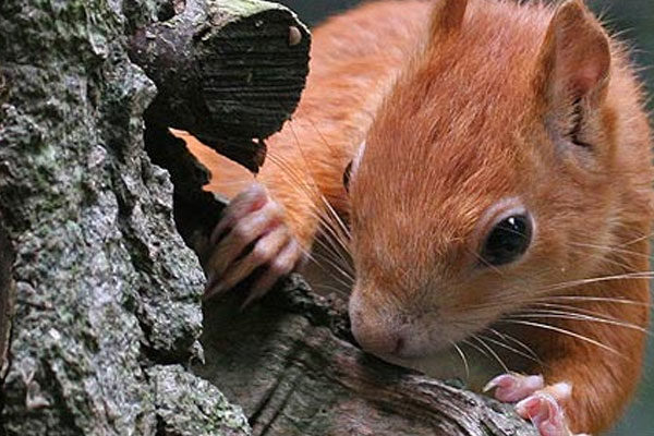 Spying squirrel