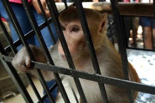 Monkey prison