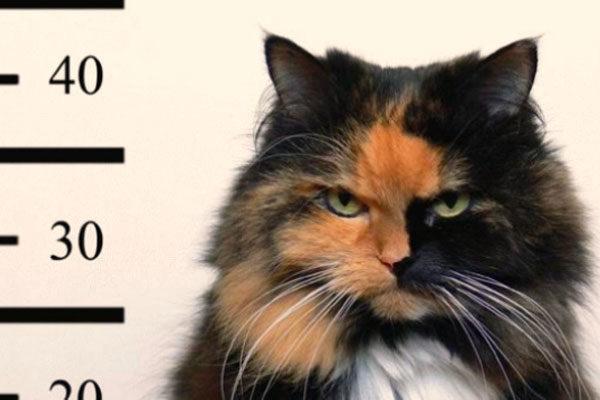 A cat accomplice