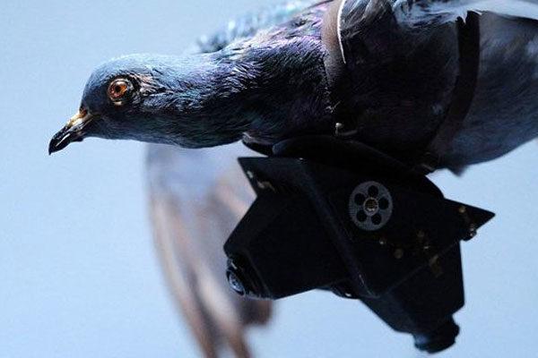 Pigeon spy