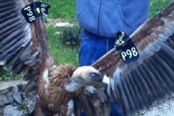 Israeli spy vulture