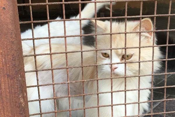 Locked cat!