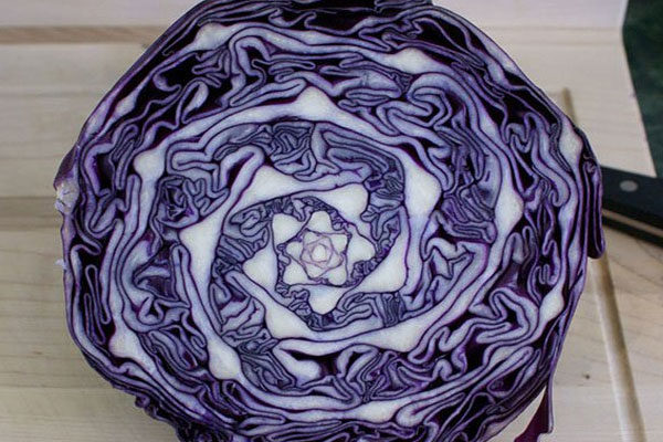 A cabbage with a pattern