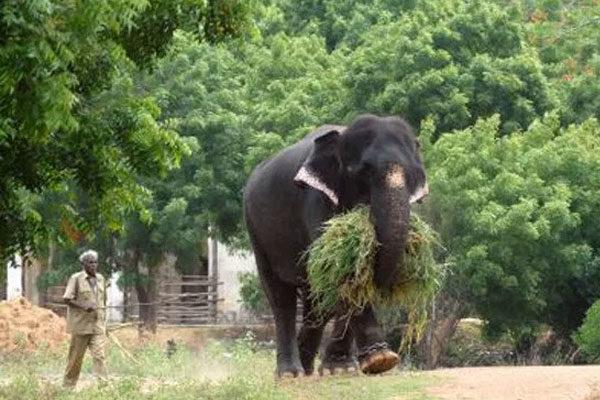 A killer elephant