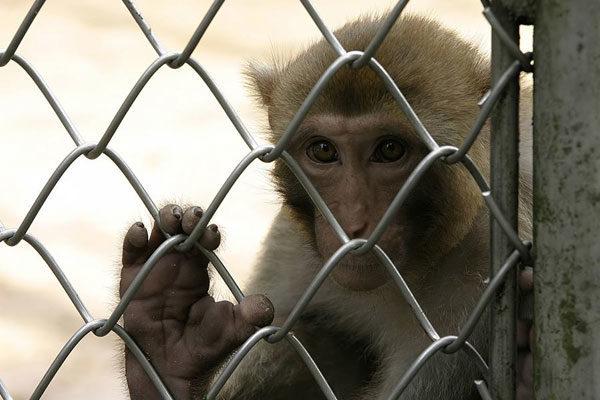 Criminal Monkey