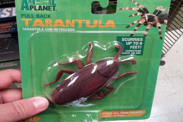 Tarantula?